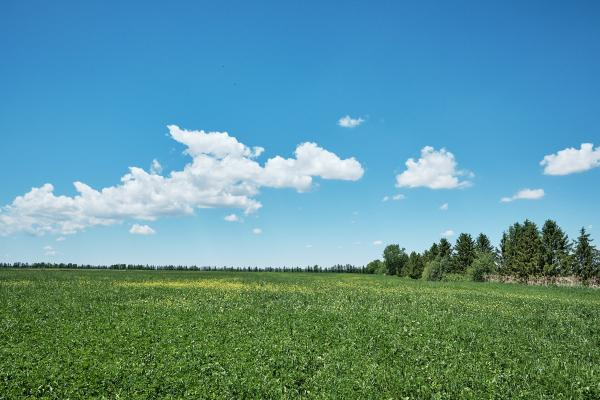 A field on a Canadian dairy farm in Québec