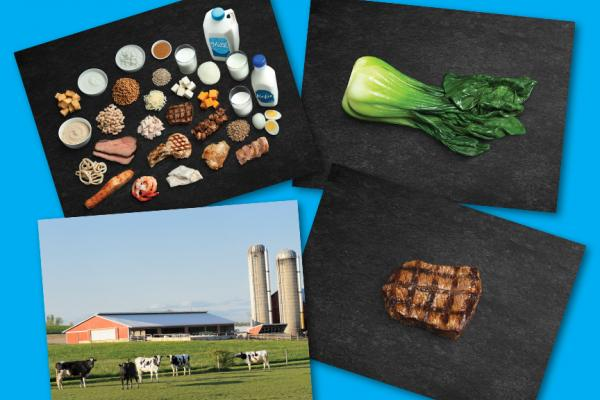 Image of Protein Food Canada's Food Guide Study Print, Farm Food Origin Study Print, bok choy, and beef.