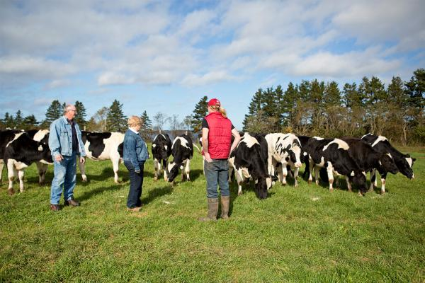 The MacInnis family spends time outside in a field with some of their dairy herd at MacInnis Brothers Farms, PEI.