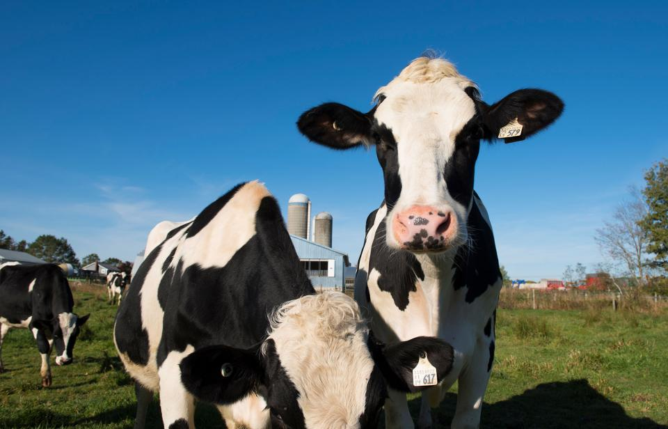 Canadian Milk Is No Place For Artificial Growth Hormones Dairy Farmers Of Canada