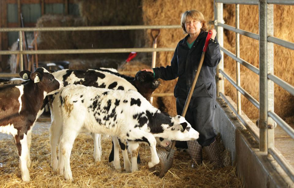 Nancy Wert tends to calves in a group pen at Stanlee Farms in Ontario.